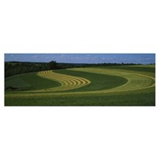 Curving crops in a field, Illinois Poster