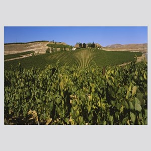 Vineyard on a landscape, Yakima Valley Appellation