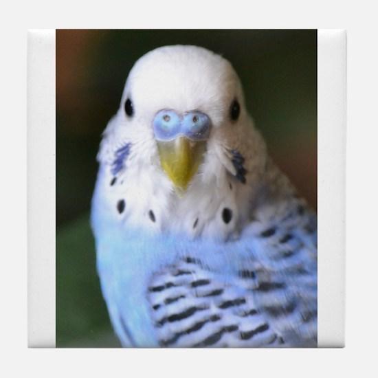 Unique Blue parakeet Tile Coaster