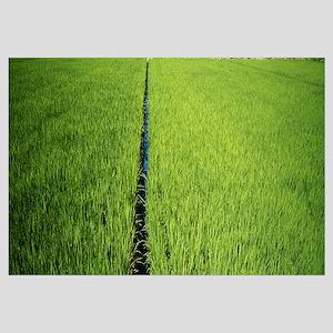 High angle view of a rice field, Matsuzaki, Japan