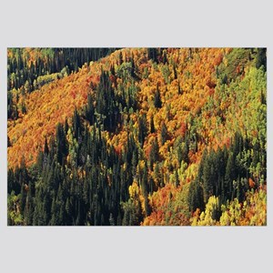High angle view of trees in the forest, Utah Count