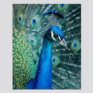 Peacock 5644 - Small Poster