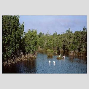 Florida, JN Darling National Wildlife Refuge, bird