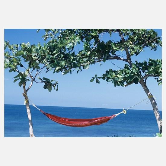 Hammock tied between two trees, Puerto Rico
