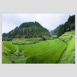 High angle view of rice paddies, Kumamoto Prefectu