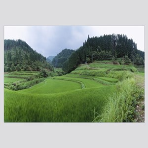 Rice paddy in a field, Kumamoto Prefecture, Japan