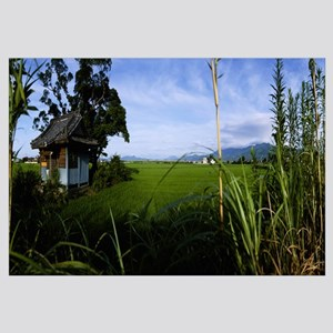 Rice paddies in a field, Saga Prefecture, Kyushu,