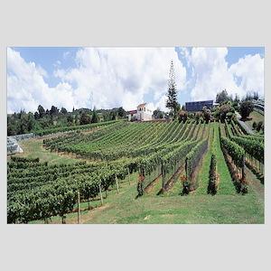 Panoramic view of a vineyard, Whangarei, New Zeala