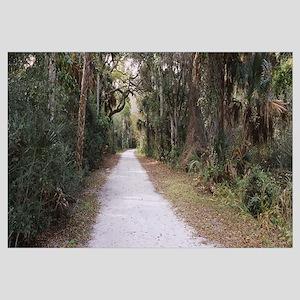 Trees along a dirt road, Eldora, Canaveral Nationa