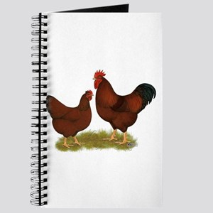 New Hampshire Chickens Journal