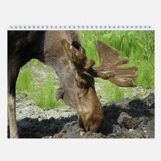 Bull Moose #01 Wall Calendar