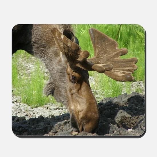 Bull Moose #01 Mousepad