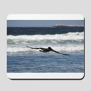 Beach Birds Photography & Pro Mousepad