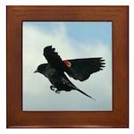 Flying Redwing Framed Tile