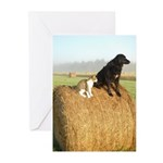 Cat and Dog on Hay Bale Greeting Cards (Pk of 20)