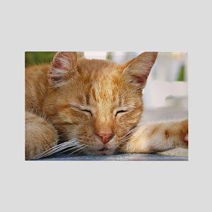 Sleeping Cat Rectangle Magnet