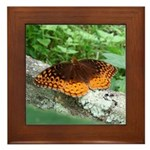 Great Spangled Fritillary Framed Tile