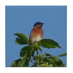 Treetop Bluebird Tile Coaster