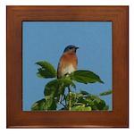 Treetop Bluebird Framed Tile