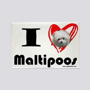 I Love Maltipoos Rectangle Magnet