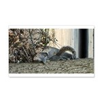 Spring Fever Squirrels