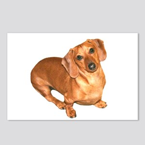 Tiger Doxie Postcards (Package of 8)