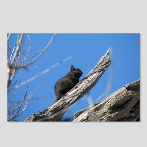 Cute Squirrel Postcards (Package of 8)