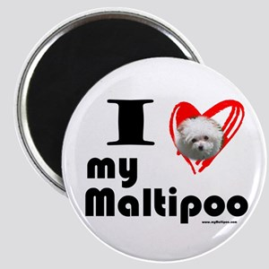 I Love my Maltipoo Magnet