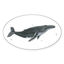 Humpback Whale Sticker (Oval)
