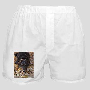 Beauceron Leaves Boxer Shorts