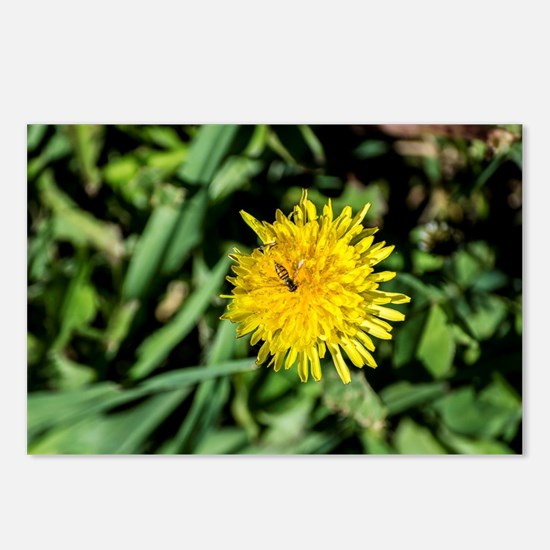 Unique Bees and dandelion Postcards (Package of 8)