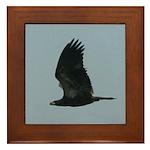 Young Eagle Flying Framed Tile