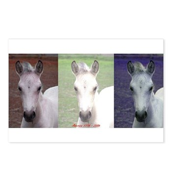 Horse Patriot Postcards (Package of 8)
