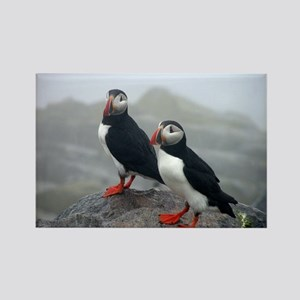 Puffins Keeping Watch Rectangle Magnet