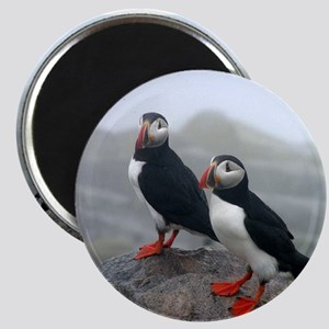 Puffins Keeping Watch Magnet