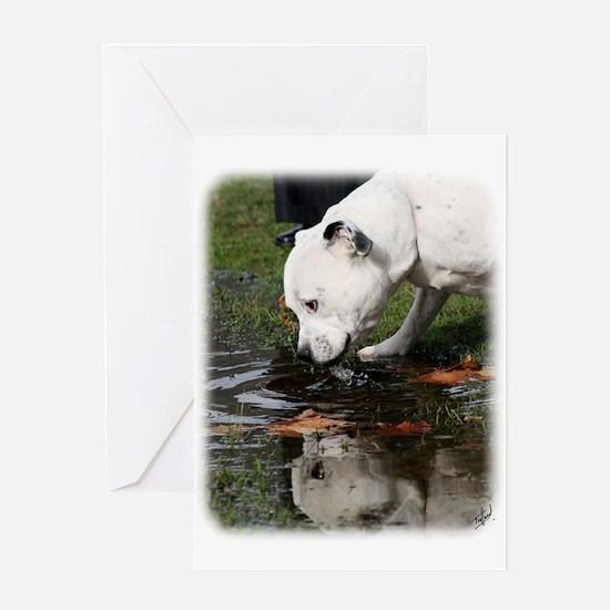 Staffordshire Bull Terrier 9Y773D-315 Greeting Car