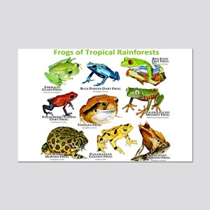 Frogs of the Tropical Rainforests Mini Poster Prin