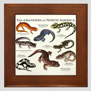 Salamanders of North America Framed Tile