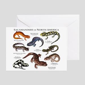 Salamanders of North America Greeting Cards (Pk of