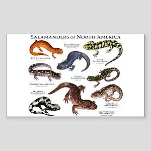 Salamanders of North America Sticker (Rectangle)