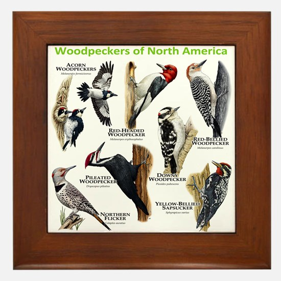 Woodpeckers of North America Framed Tile