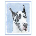 Great Dane (Harlequin) Small Poster