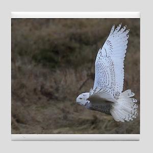 Snowy Owl flying Tile Coaster