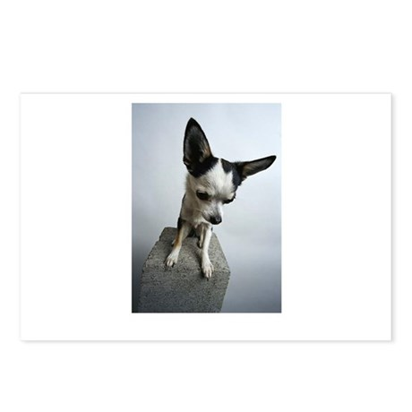Baby Chihuahua Postcards (Package of 8)