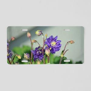 Purple Columbine 1821 - Aluminum License Plate