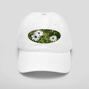 African daisies 1058 - Cap