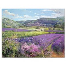 Lavender Fields in Old Provence (oil on canvas) Poster