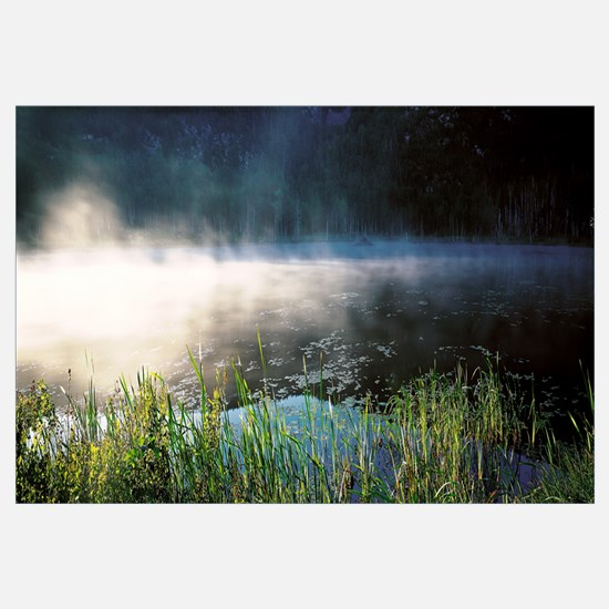 Morning fog Acadia National Park ME