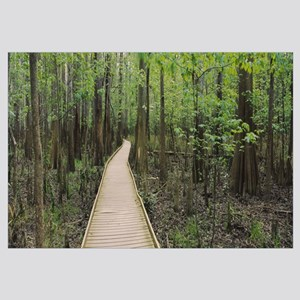 Boardwalk passing through a forest, Congaree Natio