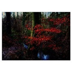 Woodland Stream Wall Art Poster